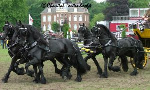 5 Friesian Carriage Side view by Amethyst--Dragon