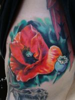 red poppy by scottytat2
