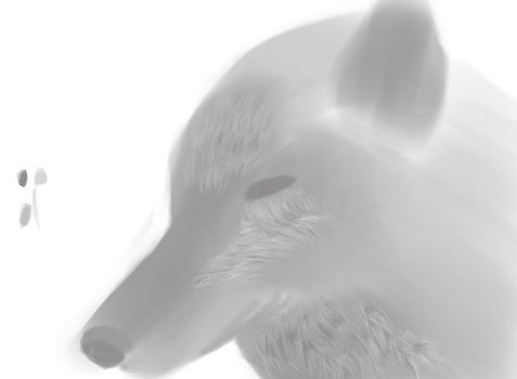 Fur Study by PeterStringer