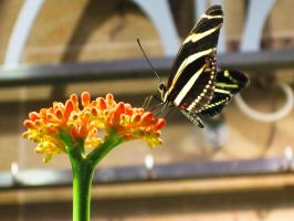 Zebra Longwing by Demon-Prayer