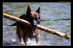 Dog by tomba76