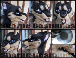 Husky shep grump head FS by Sharpe19