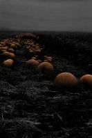 The Pumpkin field by King-Madness
