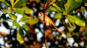 My First Hummingbird Picture by ABT-Photography