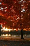 Fall on Fire by Dellessanna
