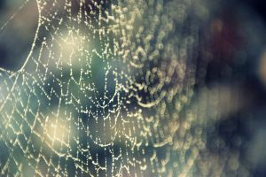 Dewy Web 2 by xFlowerCatx