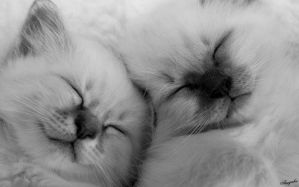 sleepies in black and white by amigaboi
