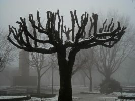 Lost in fog by Sonia-Rebelo