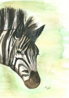 Zebra by rockpainter