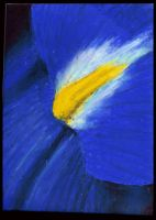 Oil Pastel Assign. -Flower I by caiticat