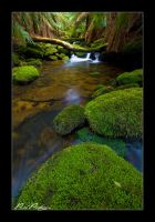 Rainforest Water V by paulmp