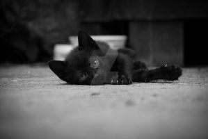 Little black kitten lying on floor by aleexdee