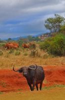 buffalo soldier by ivyblue