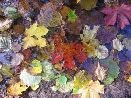 Autumn is here by indrucis