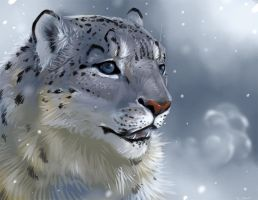Animal Portrait - Snow Leopard by DanjiIsthmus