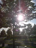 Sunlight through tree by evilminky666