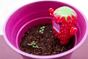 Grow Strawberries!! by PiliBilli