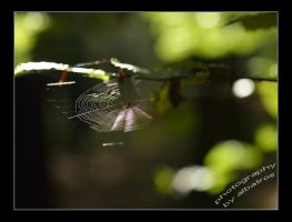 Spiders Home by albatros1
