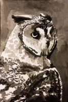 Inkwash Owl by Haatch