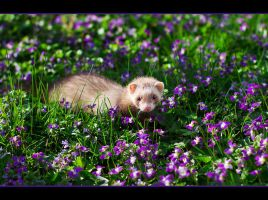 Sammy's first Spring... by HeezDedJim