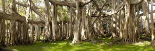 The Banyan Tree by kl61