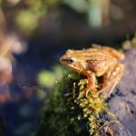 Lucky Frog by FreyaPhotos