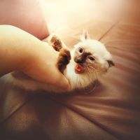 tickle attack by mohdfikree