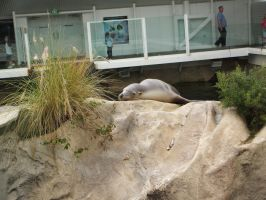 Sea Lion by jess13795