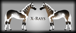 X-Rays Ref by Drasayer