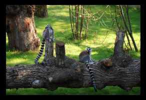 Lemur's family by Nataly1st