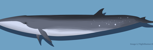 Sei Whale by Morgan-Michele