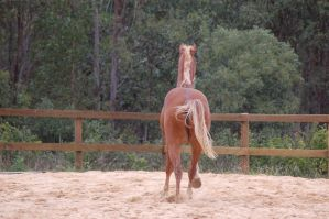 TB canter direct behind by Chunga-Stock