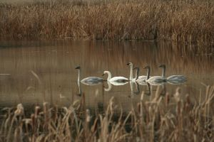 Swan Lake by FroglovinPhotogirl