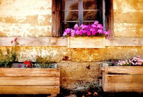 Rustic Flowers by robgbob
