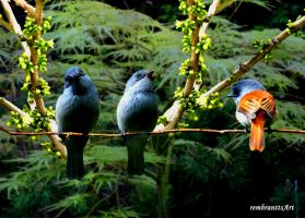 Bird family by rembrantt