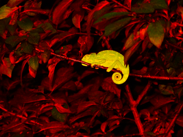 Goodnight Little Chameleon by IoannisCleary