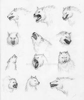 Sketches: Wolves by Nyranor