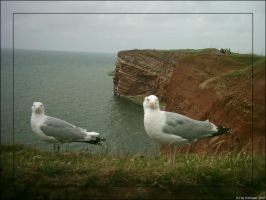 Seagull on Helgoland original by Darkaan