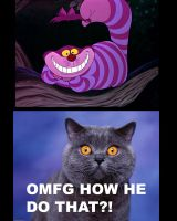 LOLCAT Cheshire vs. Cheshire by lainwiththedevil