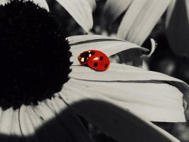 Lady Bug, Red, White And Black by xpurplemonkeyfanx