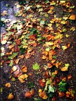 Leaves by haileysthelimit