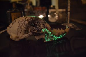 Bobcat Skull Jaw Glow by ThePaintedCoyote