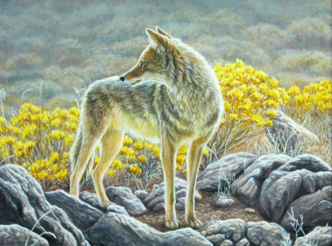 Coyote by Hareguizer