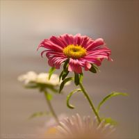 Flowers 8 by rici66