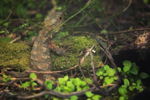 Tuatara #1 by originallyblue