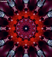 Red Petal Flower Shoes Kaleidoscope by CarlosAE