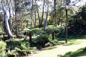 Tree ferns by mightee-mouse