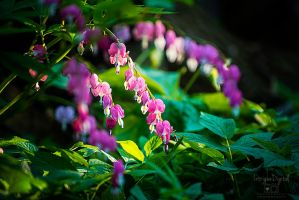 Sunshine on my Bleeding Heart(s) by JessicaDobbs
