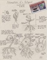 Bellsprout Research by Sguisephere