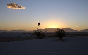 White Sands Yuccas at Sunset by elektronika7